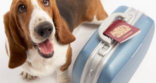 ¿Viajar o no con mascotas en Fiestas Patrias? Colegio Médico Veterinario entrega recomendaciones y advierte sobre riesgos